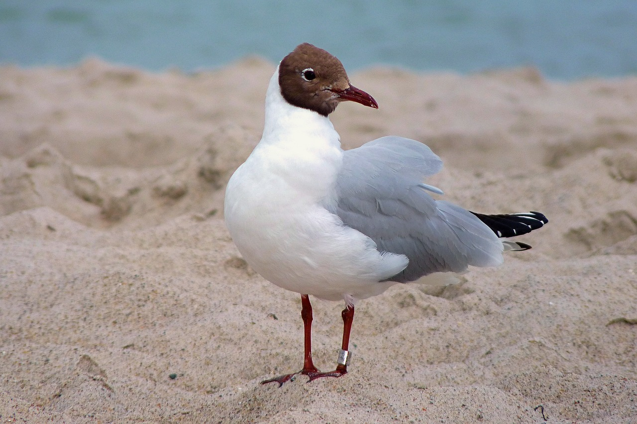 seagull-1980619_1280